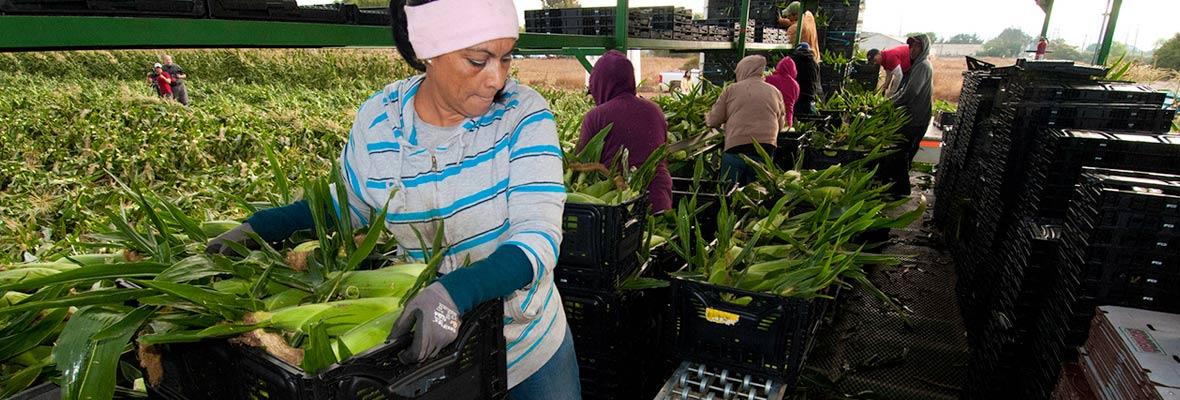 Farmworkers in California