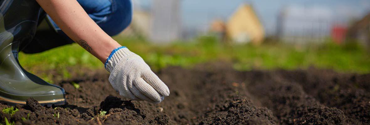 PAN Soil garden