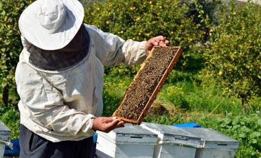 Bee science
