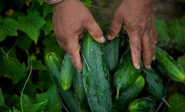 Farmworker hands
